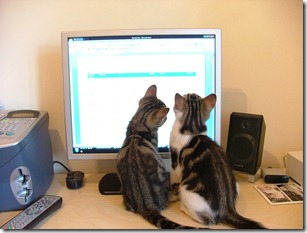 Kittens 001